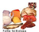 foto mostrando alimentos ricos em proteínas.